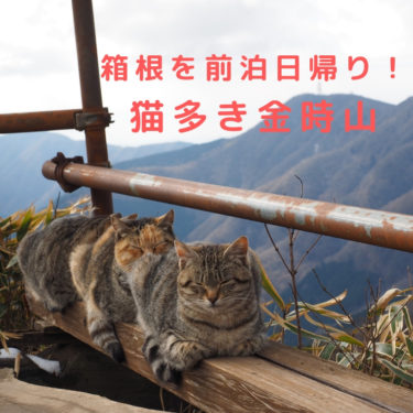 【箱根】日帰りで行ける山を前泊で楽しむ!金時山前後で温泉を楽しむ山旅