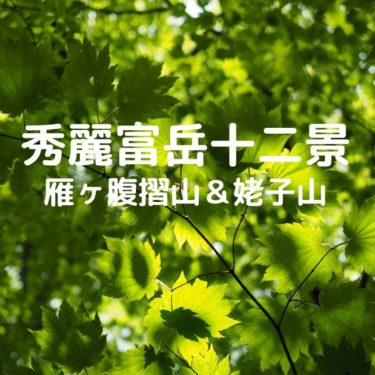 【秀麗富嶽十二景】新緑の時期に登る、雁ヶ腹摺山と姥子山縦走