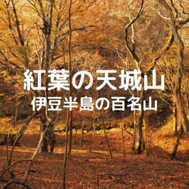 【日本百名山 天城山】11月に入ってからも間に合う紅葉。黄葉の美しい樹林帯歩き