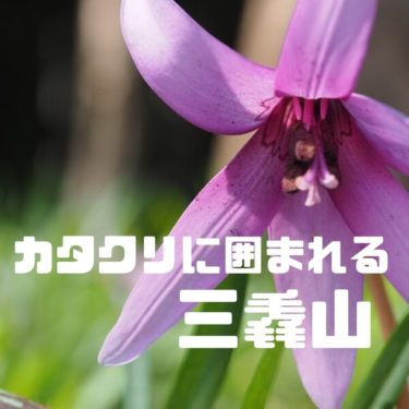 【栃木】カタクリ、イチゴ、カタクリ三昧の三毳山(みかもやま)