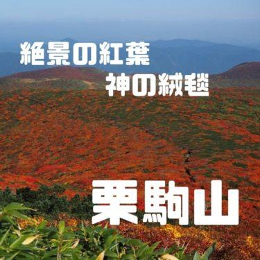 【東北紅葉】神の絨毯と称される、絶景の紅葉を見に栗駒山へ!