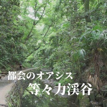 身近な自然を味わいに。等々力渓谷にマイナスイオンを浴びにいく旅