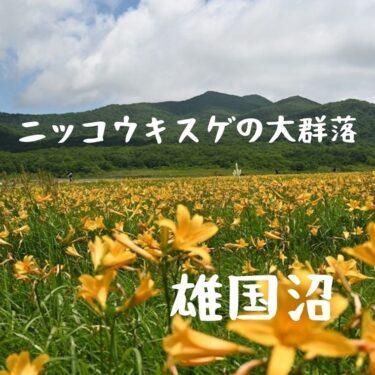 【南東北】Nikon Z5+NIKKOR Z 24-200mmで行く福島県の雄国沼。日本一のニッコウキスゲに包まれる山旅